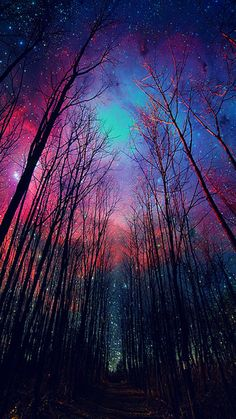Milky Way colored sky and winter trees, made visible by time lapse. Beautiful World, Beautiful Places, Amazing Places, Beautiful Forest, Beautiful Scenery, Beautiful Sunset, Beautiful Landscapes, Beautiful Eyes, Galaxy Wallpaper