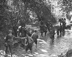 WWII Muleskinners guide mules across stream in Burma. Photographer Unknown