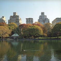 I would love to go to NYC, see Central Park in the fall.