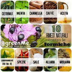 10 rimedi naturali contro le formiche