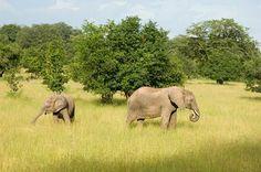 Robin Pope Safaris -- Elephant Sighting -- Luxury Safari Lodge