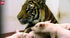 Strange animal families.  Pinned from www.godtube.com, 8/24/2013