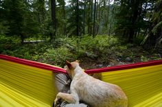 SOG Adventurer @tidelinetoalpine and her awesome pup doing some relaxing.
