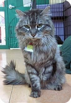 Fur Everywhere: Shy, Affectionate Uno Seeks His Forever Home: Opt to Adopt
