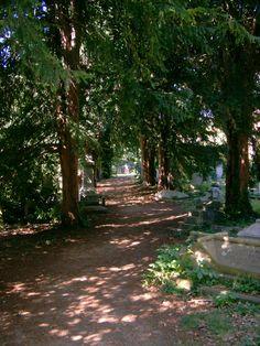 Sidewalk, Country Roads, Plants, Side Walkway, Walkway, Plant, Walkways, Planets, Pavement