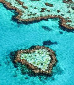 Heart Reef in the Great Barrier Reef amazingly captured by @whitsundaysphotography  Who would love to fly over and see this amazing sight too?  Sending Love & Good Vibes Babes  #BondiVenus #whitsundays #greatbarrierreef #heartreef #positivity #love #GoodVibes #travel #qld #seeaustralia #australia #wanderlust #nature #mothernature by bondivenus http://ift.tt/1UokkV2