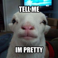 tell me im pretty