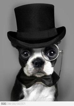 Like a sir.