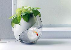 цветочный горшок-аквариум