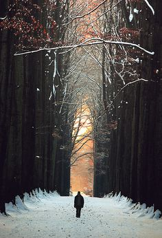 Flemish Brabant, Belgium in the winter    (by Vainsang)