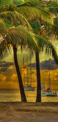 St Maarten - Sunset, Ships and Palm Trees
