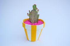Cactus maceta rayas amarillas