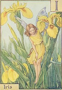 I is For Iris- by Cicely Mary Barker