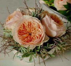 pale peach garden rose named Juliet