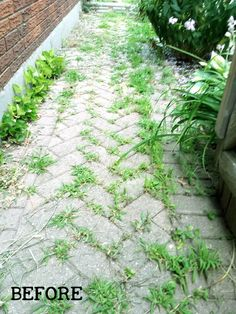 If you have a brick pathway, driveway, or patio, you know the curse. For as nice… Brick Driveway, Brick Pathway, Stone Path, How To Remove Grass, How To Kill Grass, Cobblestone Patio, Grass Weeds, Herb Garden Design, Garden Tips