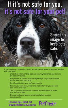 Repin this to help keep pets safe!