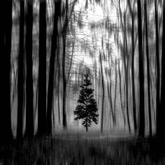 Forest is a creation by Luigi Esposito. Category image. 123 points, 30 appreciations, 3 comments, 3 favourites, 77 views. Image #659089.