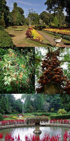 Secret Lanka, your travel agent and tour operator for Sri Lanka and Maldives. Tropical Gardens, Darjeeling, Tour Operator, Maldives, Botanical Gardens, Sri Lanka, Trekking, Postcards, Traveling By Yourself