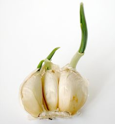 10 vegetables and herbs you can buy once and regrow forever....