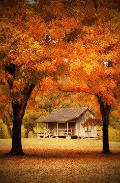 old homestead | big springs state park | missouri