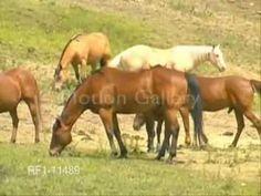 Wild Horses ~