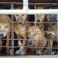 Please encourage British MPs to speak out against the dog meat trade. Petition to sign below: you can come from any country to do this ! https://www.change.org/p/uk-prime-minister-support-the-uk-parliament-s-call-to-end-the-dog-meat-trade