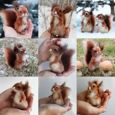 Рыжая малышня Не могу не включить их в итоговый коллаж. Бельчата всегда поднимают мне настроение, надеюсь, и вас порадуют #бельчонок #белочка #итогигода #сухоеваляние #squirrel