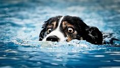 Dog photography – Les adorables portraits canins d'Alicja Zmyslowska (image)