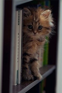 .Whaddy mean get out of here!! I am looking for a good book to fall asleep on!! Back Off!!