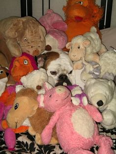 """❤ You can never have too many """"friends""""  ❤ Posted on Baggy Bulldog"""