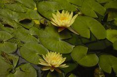 La meva creació jardín botánico