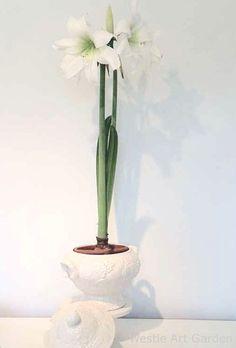 Google Image Result for http://4.bp.blogspot.com/-sExRn5_YVWU/T0cKS4CDoxI/AAAAAAAACxA/F7myDBp4rNE/s1600/flower-pots-white.jpg