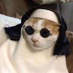 SISTER COOL CAT