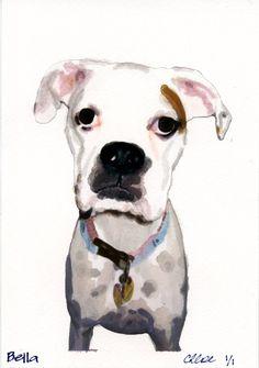 Bella the white boxer in watercolor