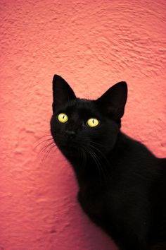 """Bless the black cats of the world.  Stupid superstitions are still rampant in some countries where black cats are abused and killed because of their colour. I ♥ my Black Cat - Draco """"The drasgon"""" Malfoy."""