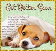 Get Well Soon Funny, Get Well Soon Quotes, Pet Quotes, Animal Quotes, Life Quotes, Get Well Messages, Get Well Cards, Morning Hugs, Morning Wish