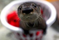 Baby Otter!