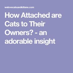 How Attached are Cats to Their Owners? - an adorable insight