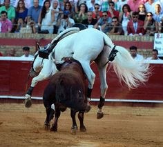 rejoneo a caballo 2010 - Google Search