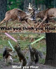So true! One time a big fox squirrel dashed between some trees on a ridge and man after a long morning sit I was sure it was the back of a deer! Funny Hunting Pics, Deer Hunting Humor, Hunting Jokes, Whitetail Deer Hunting, Deer Hunting Tips, Turkey Hunting, Hunting Stuff, Bow Hunting, Hunting Guns