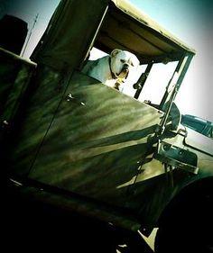 Randall Erkelens Photography Blue Dot Denver   Dogs in cars