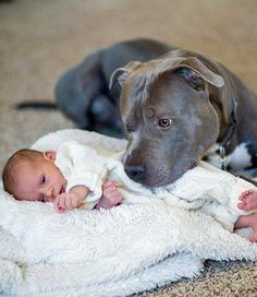 Awww he's protecting the baby