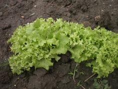 saláta társkereső app