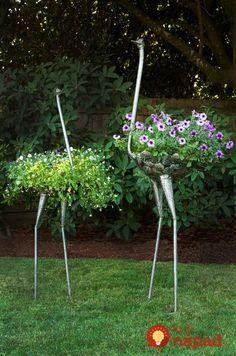 Okolo týchto kvetov veru nikto neprejde len-tak bez povšimnutia.