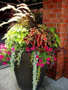 Gorgeous 35 Patio Planters Outdoor Ideas for Your Home Outdoor Decoration - Plantas Tropical - Plants Diy Planters Outdoor, Outdoor Flowers, Garden Planters, Outdoor Gardens, Planter Ideas, Outdoor Ideas, Patio Ideas, Porch Ideas, Potted Plants Patio