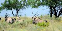 Amazing African Game Reserve for sale! Added more photos. Water Resources, Game Reserve, Types Of Soil, Zebras, Rocky Mountains, More Photos, Giraffe, Wildlife, African