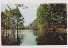 TOMAHAWK WISCONSIN WI Greetings The Pine Tree Shop Vintage Postcard PC in Wisconsin | eBay