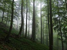 mittagstein-regen-15 Berg, Adventure, Mists, Weather, Hiking, Stones, Tips, Adventure Game, Adventure Books