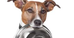 Do you have a photo of your dog using a door? If you do, you can use that photo to enter this contest! You could help win 1000 pounds of dog food for Rikki's Refuge! Submissions (USA only) accepted through 11/30/14.  http://plexidors.com/contest-2014/
