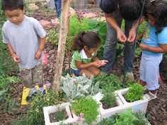 With the class create a Five Senses Garden. May not be DAP but can alter. Let the children explore the plants with the five senses.